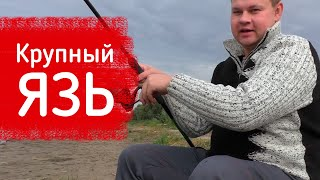 Язь рвет поводки Закрытие рыбалка на фидер Река Иртыш Обзор прикормки Vabik Special OmskFish