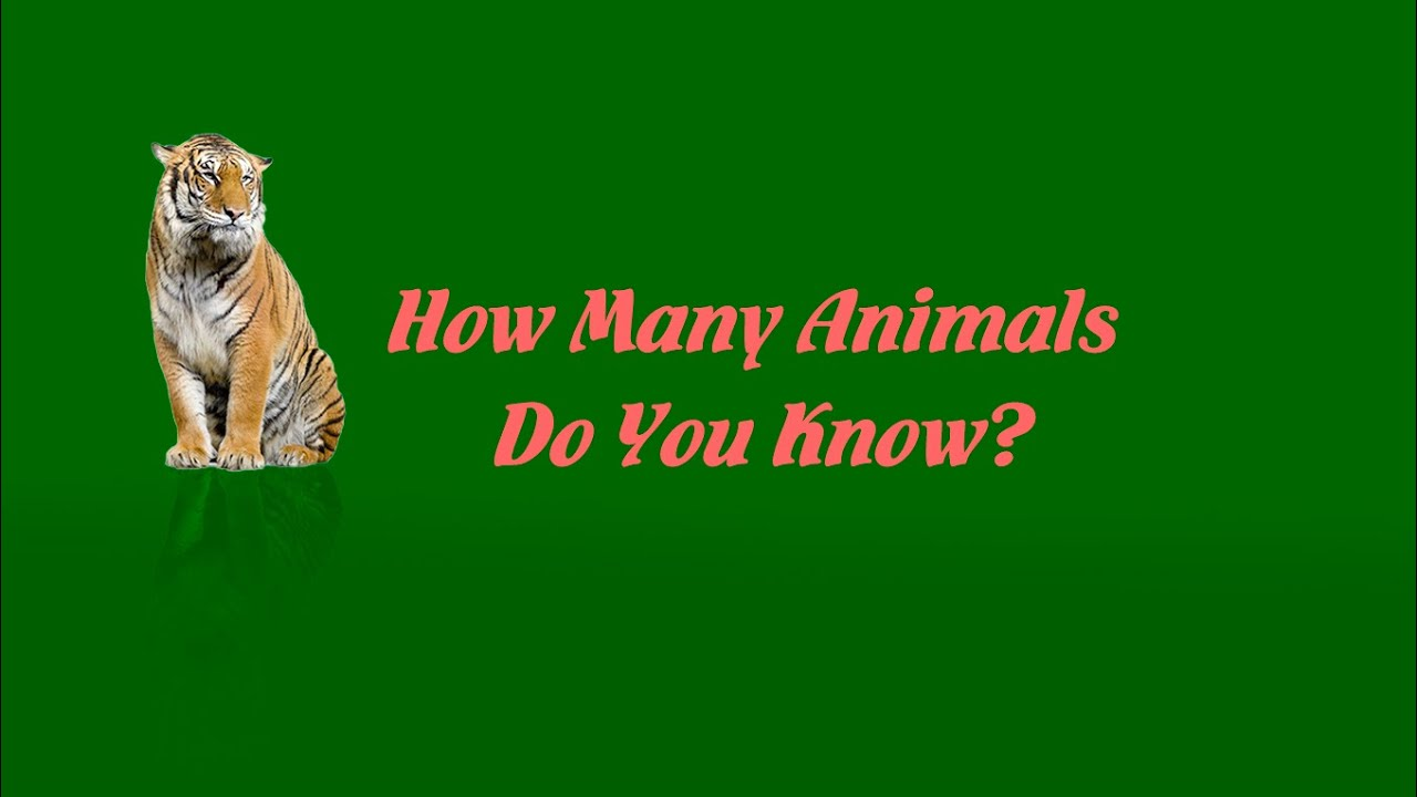 🆕educational Enghish For Kids / HOW MAN ANIMALS DO YOU KNOW???