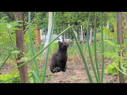 Relaxing Cat Video 54