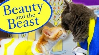 Disney's Beauty and the Beast (Cute Kitten Version)