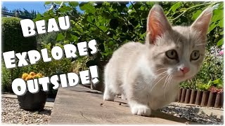 MUNCHKIN KITTEN/CAT 'BEAU' EXPLORES THE GARDEN!