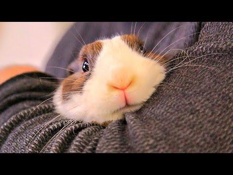 Кролик - Порно Видео: Популярные - Tonic Movies