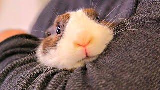 Смешные Милые Кролики 2015! Веселая Видео подборка!(Смешные Милые Кролики 2015! Веселая Видео подборка! кролики, маленькие..., 2015-06-19T21:49:11.000Z)