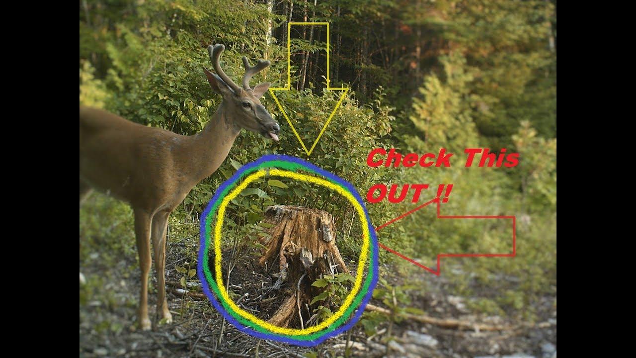 Deer Attractant Stump Licker Homemade