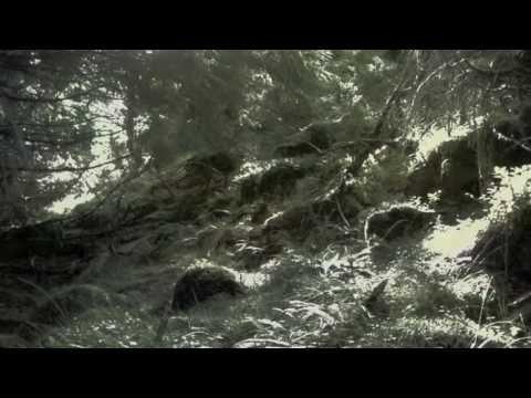 Canto Notturno di un Pastore errante di Sirio - Alberto Ezzu