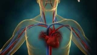 Diakses dari https://youtu.be/5UkXnEjv7x4 Fisiologi Peripheral Artery Diseas..