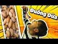 Lần đầu ăn Đuông dừa.. | Try coconut larvae for the first time