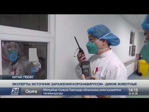Эксперты: источник заражения коронавирусом - дикие животные