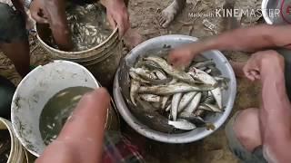 Fishing Videos   Fishing in Nepal l माङ्गुर , बरालि, असला Full HD