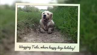 Wagging Tails Home Dog Boarding