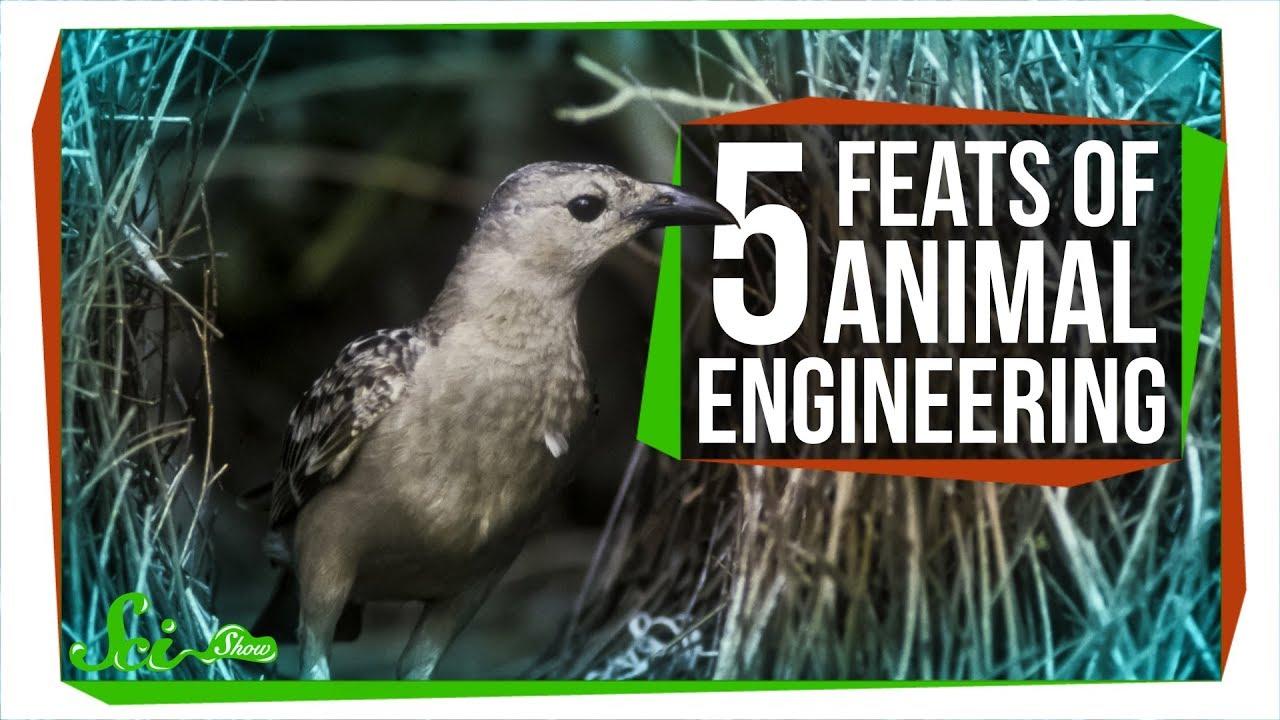 5-amazing-feats-of-animal-engineering