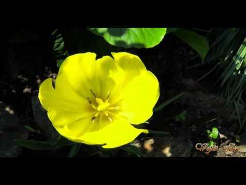Vojto - Video - Relax 849 - Záhrada - 2K (husle)