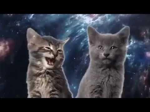Коты поют youtube