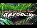 omg.. BIGG!!!  Large Cardamom Plantation | Deep forest | Commercial Planting | kerala