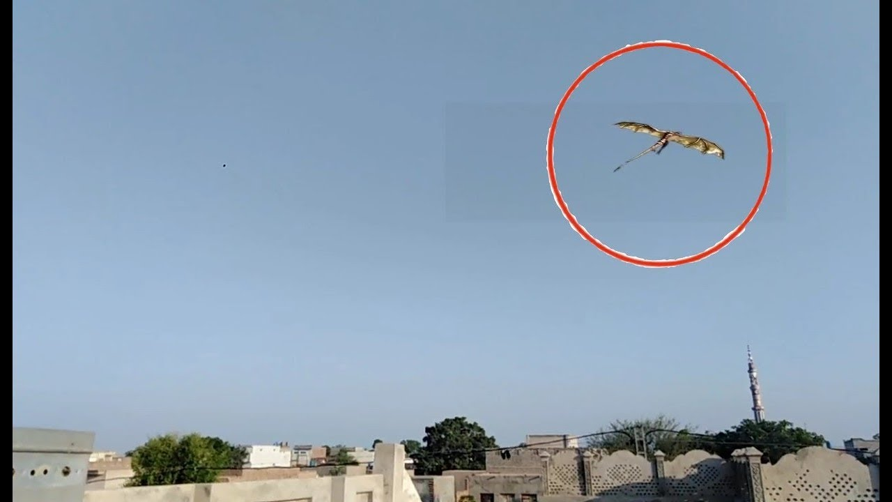 Pegasus Caught on Camera and spotted to real life | horse ...