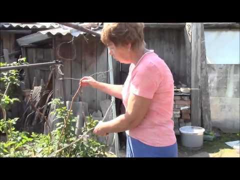 Природное земледелие в гостях у Далингер Людмилы