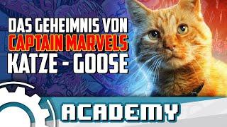 Alles über Captain Marvels Katze