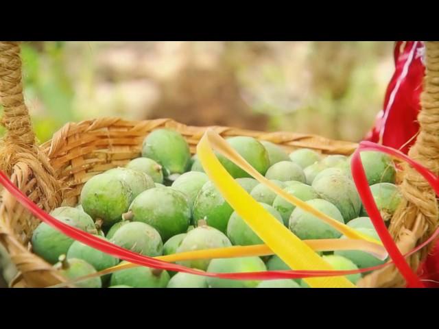 Frutos da Terra - Abertura