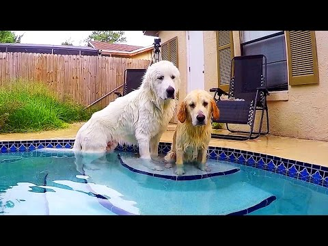 Super Cooper Sunday #24 - Teaching Koda How to Swim!