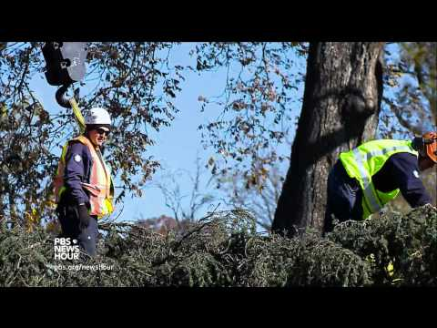From Alaska to DC, the journey of the Capitol Christmas tree