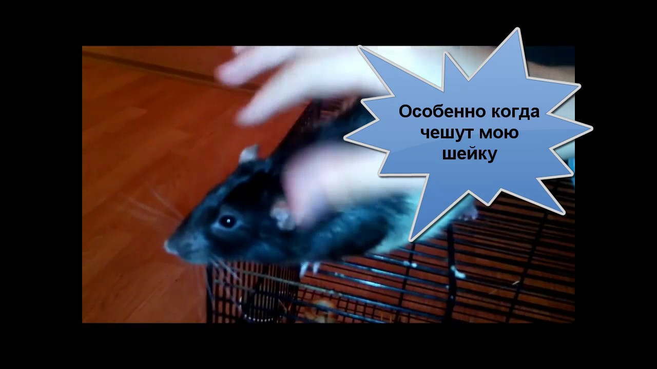Крыса в палатке с шаурмой. Шаверма патруль - YouTube