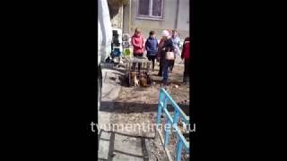100 шпицев выселили из квартиры в Тюмени