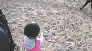 Mila juoksuttaa heppaa ekaa kertaa elämässä Video