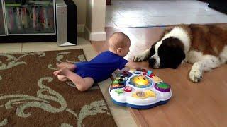 セントバーナード犬と一緒に遊ぶ赤ちゃん - 犬と赤ちゃんの動画 私たち...
