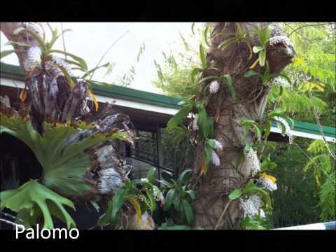 thailand orchid orquideas tailandia