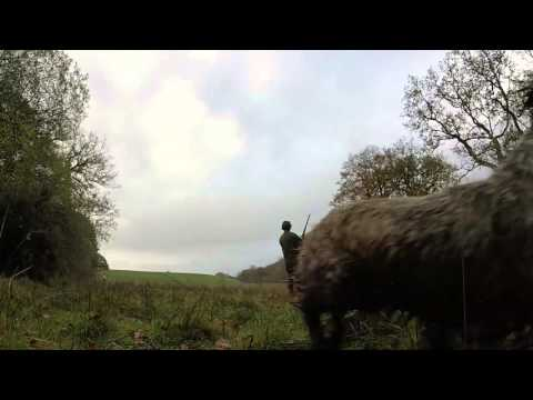 Pheasant Shooting, Devon