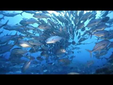 Solomon Islands - Bilikiki