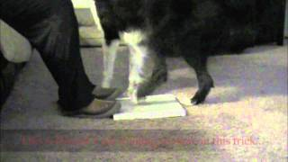 Grind Nails On Hind Paws - Clicker Dog Training