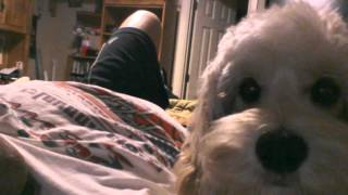 My dog Loli video.3gp
