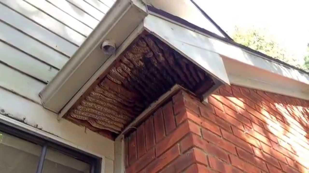 Honeybee Removal 080 Bees In Soffit Kingwood Texas