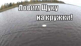 Болото Оршинский Мох, На Вездеходе Шерп, Коп, Рыбалка Ч6