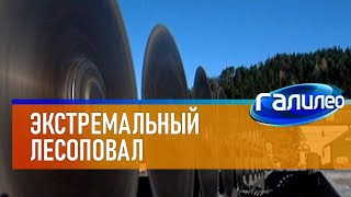 Галилео | Экстремальный лесоповал
