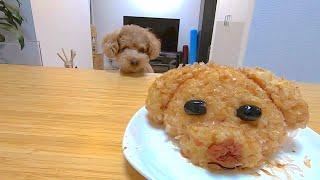 【Twitterで話題】トイプードルおにぎりを犬と作ってみたらなぜか豚になった。