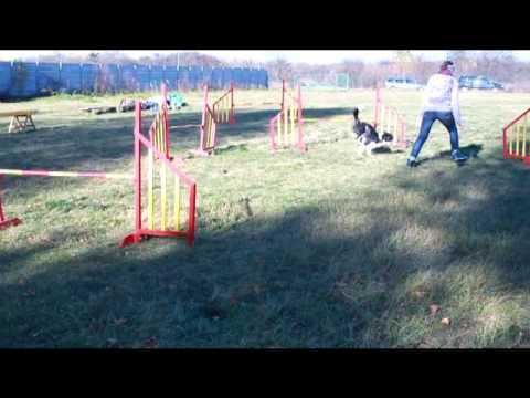 Honda - jesienne frisbee & agility
