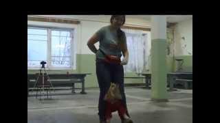 Юля и американский кокер-спаниель Делли