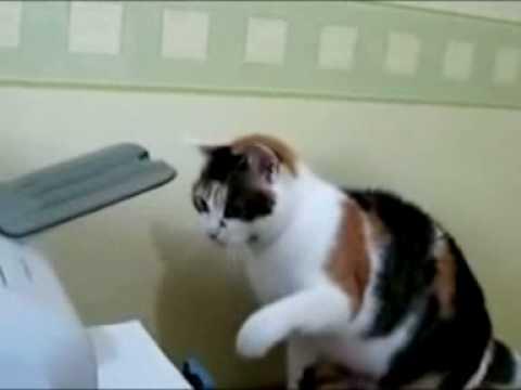 mad cat attacks fax