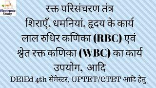 रक्त परिसंचरण तंत्र, RBC & WBC, धमनी, शिरा, हृदय का कार्य : DElEd 4th सेमेस्टर