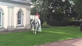 White horse wedding at butterley grange mansion/ equestrian bride