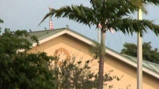 Gansos del Parque Mc Donald (Hialeah)  Miami Dade County, Florida, Estados Unidos