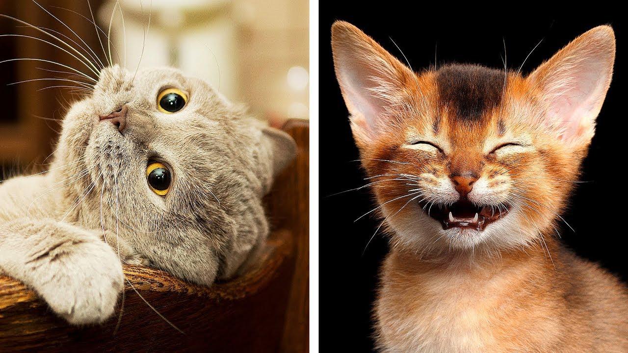 10 Razze Di Gatti Più Pericolose Del Mondo Youtube