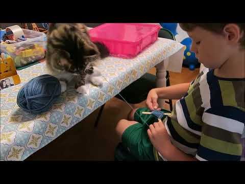 Maine Coon Kitten Update | 6 Months Old