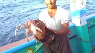 WWF-Pakistan trained fishermen release a gigantic diamondback squid along Balochistan coast