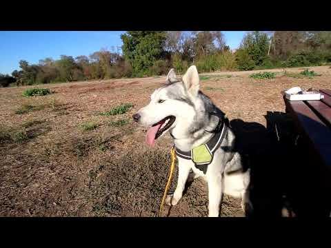 dogs-training-video