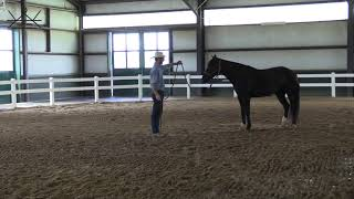 How to Teach Your Horse to Circle Softly | Ground Work Series 5/6    Exercise #4 Direct and Drive