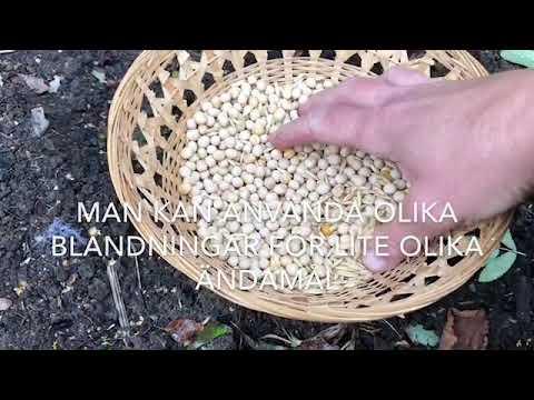 Gröngödsling Gröngödsla Jorden Och Återge Näring Och Lista På Gröngödslingsväxter