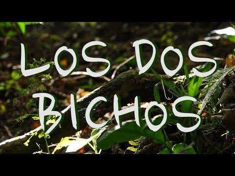 Los Dos Bichos - Chapitre 8 : Ça s'balade en Colombie et en Équateur